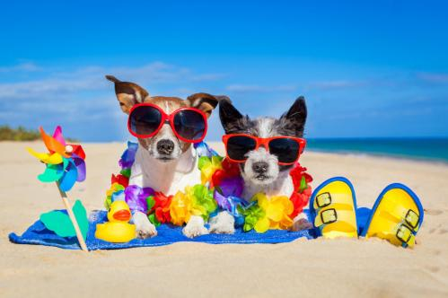 Chiens a la plage